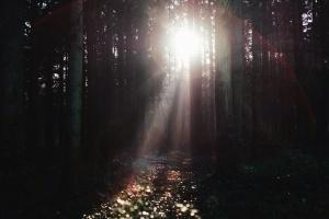 chi nhánh cây, hoang dã, rừng, mặt trời, rừng