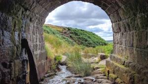 강, 바위, 돌, 터널, 물, 아치, 잔디, 조 경