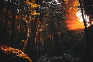 дерево, води, деревини, парк, річка, ліс, краєвид, темний