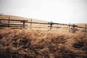 Hierba, hierba plantas, verano, temporada de verano, tiempo de verano, cerca, campo, colina, cielo