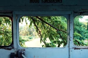 φύλλα, δέντρα, κλαδιά, πόρτα, παράθυρα, λαβή