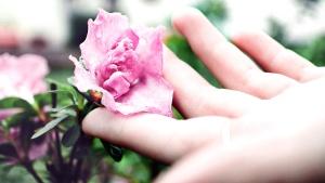 flower garden, flowers, garden, hand, petals, pistil, rose, roses, vegetation