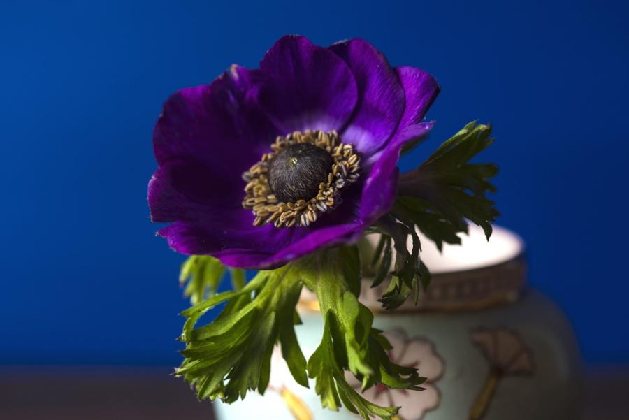 Decoración, flor, pétalos, pistil, todavía, vida, florero