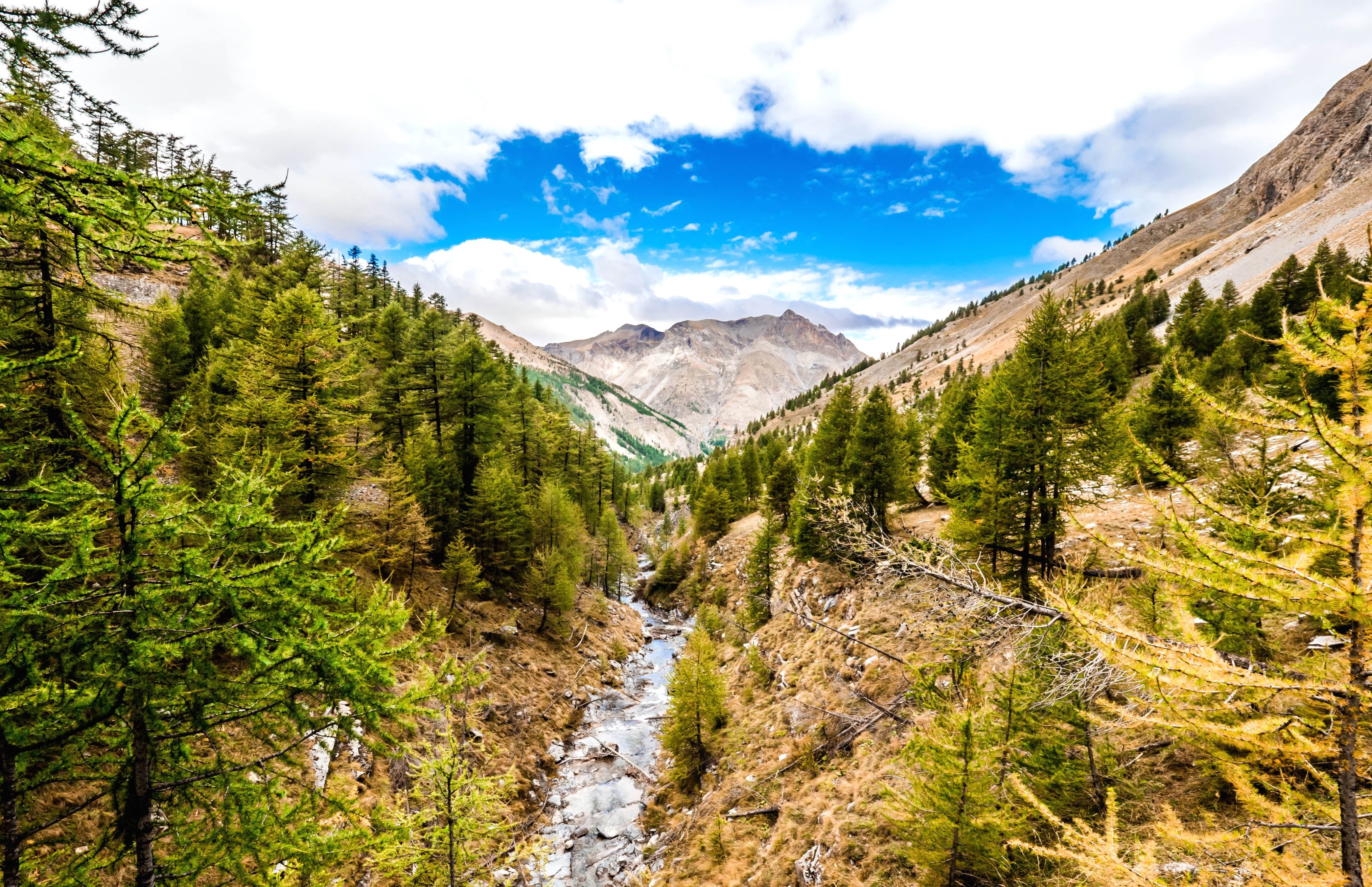 landscape mountains trees. sky travel trees valley wild woods forest hill landscape mountains l