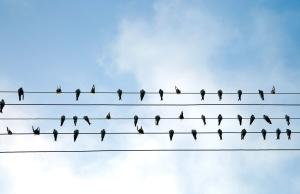 céu, pássaros, fio, bando, nuvem