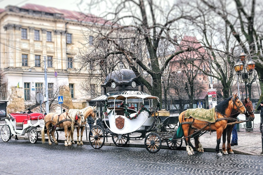 carriage, horses, cart, city, architecture, buildings, street