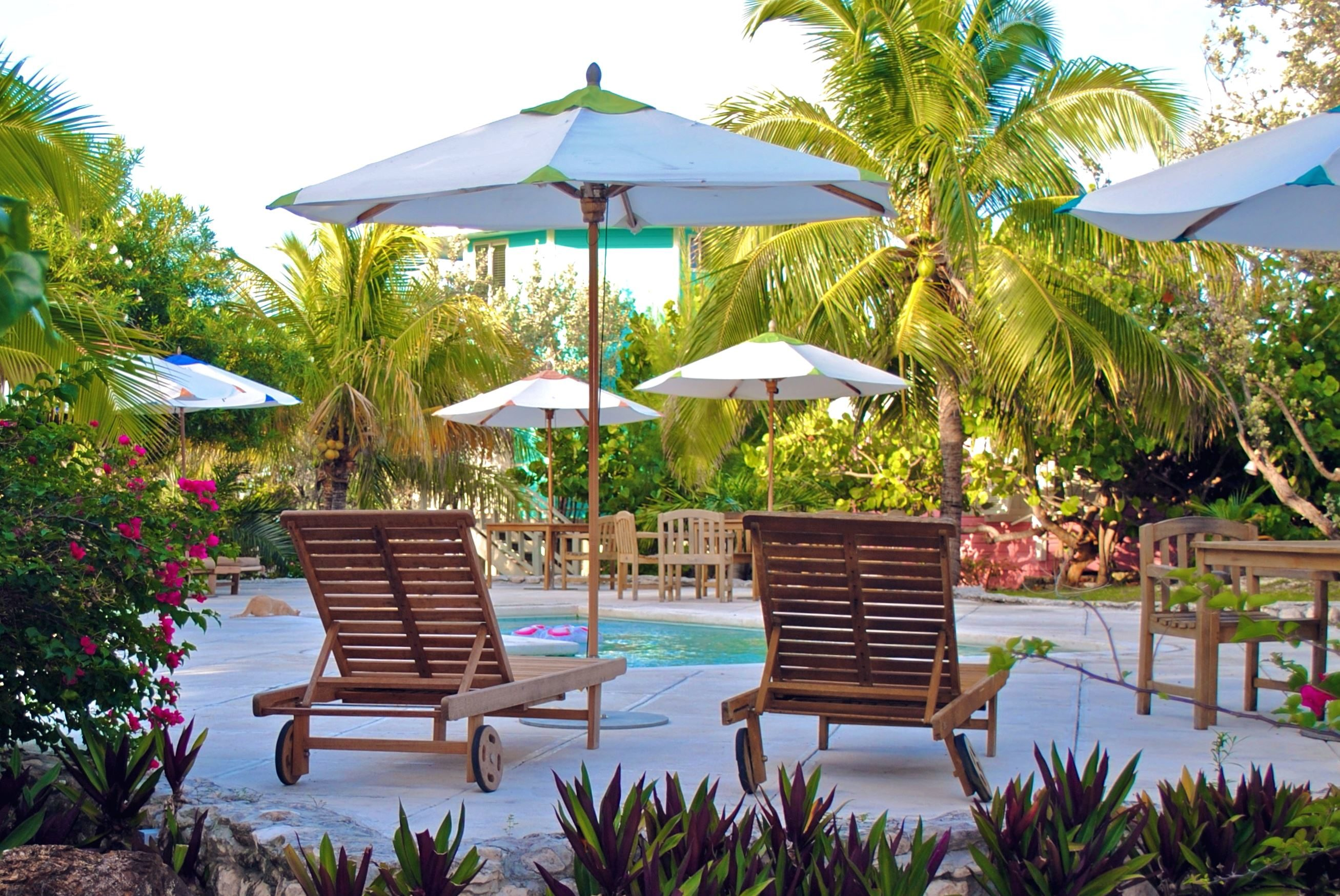 Image libre piscine jardin vacances chaise noix de for Piscine jardin exotique