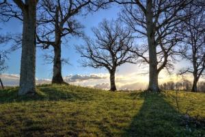 Mặt trời, cây, nhánh, cỏ, phong cảnh, thiên nhiên