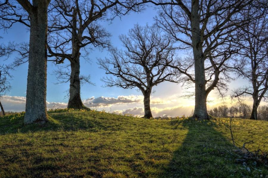 Sun, fák, fű, ágak, táj, természet