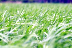 natureza, planta, campo, grama, verde, gramado