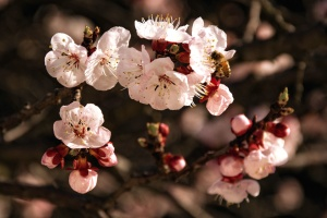 nature, petals, beautiful, bloom, spring, branch