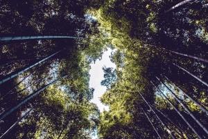 дерева, ліс, ліс, природи, небо