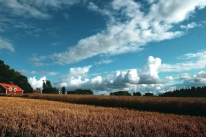 sky, wheat, field, agriculture, barn, cloud, crop, cropland, farm, farmland