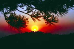 silhouette, sky, Sun, tree, nature