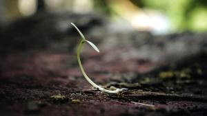 fokus, marken, växt, jord, spira