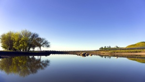 небе, пътуване, дървета, езерото, лозе, вода