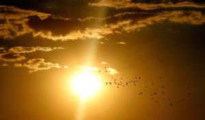 Oiseaux, troupeau, crépuscule, ciel, soleil, paysage