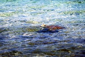 동물, 바다, 바다 거북이, 물