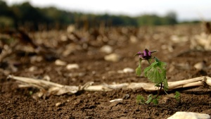 nature, plant, soil, flora, purple, flower, mud