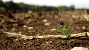 Naturaleza, planta, suelo, flora, púrpura, flor, barro