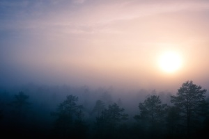mist, nature, sky, Sun, trees, clouds, fog, forest