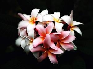 Stillleben, Blumen, Fotostudio, Blüte, Dekoration
