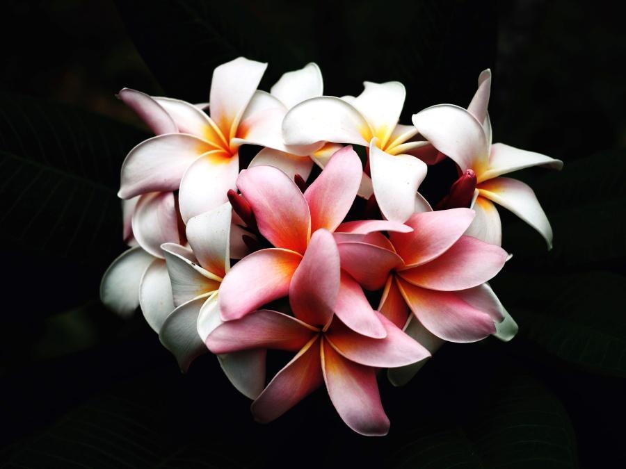 still life, flowers, photo studio, bloom, decoration
