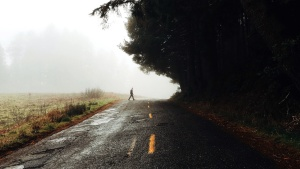 weather, asphalt, crossing, farm, farmland, fog, forest