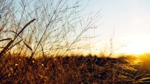 Природа, небо, солнце, трава