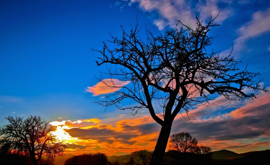 nature, silhouette, sky, sunset, tree, cloud, landscape