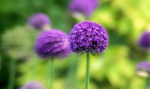 petals, plant, bloom, flower, blossom, field, flora, flower, garden