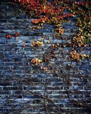 Piedra, textura, urbano, pared, arquitectura, otoño, planta