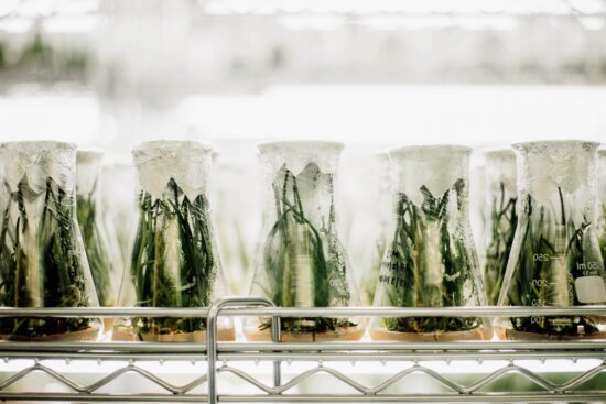 laboratory, biology, vegetable, agriculture, glass, plants