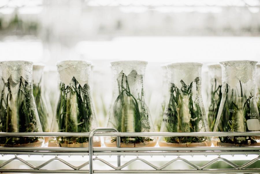 Laboratoire, Biologie, Légumes, Agriculture, Verre, Usines