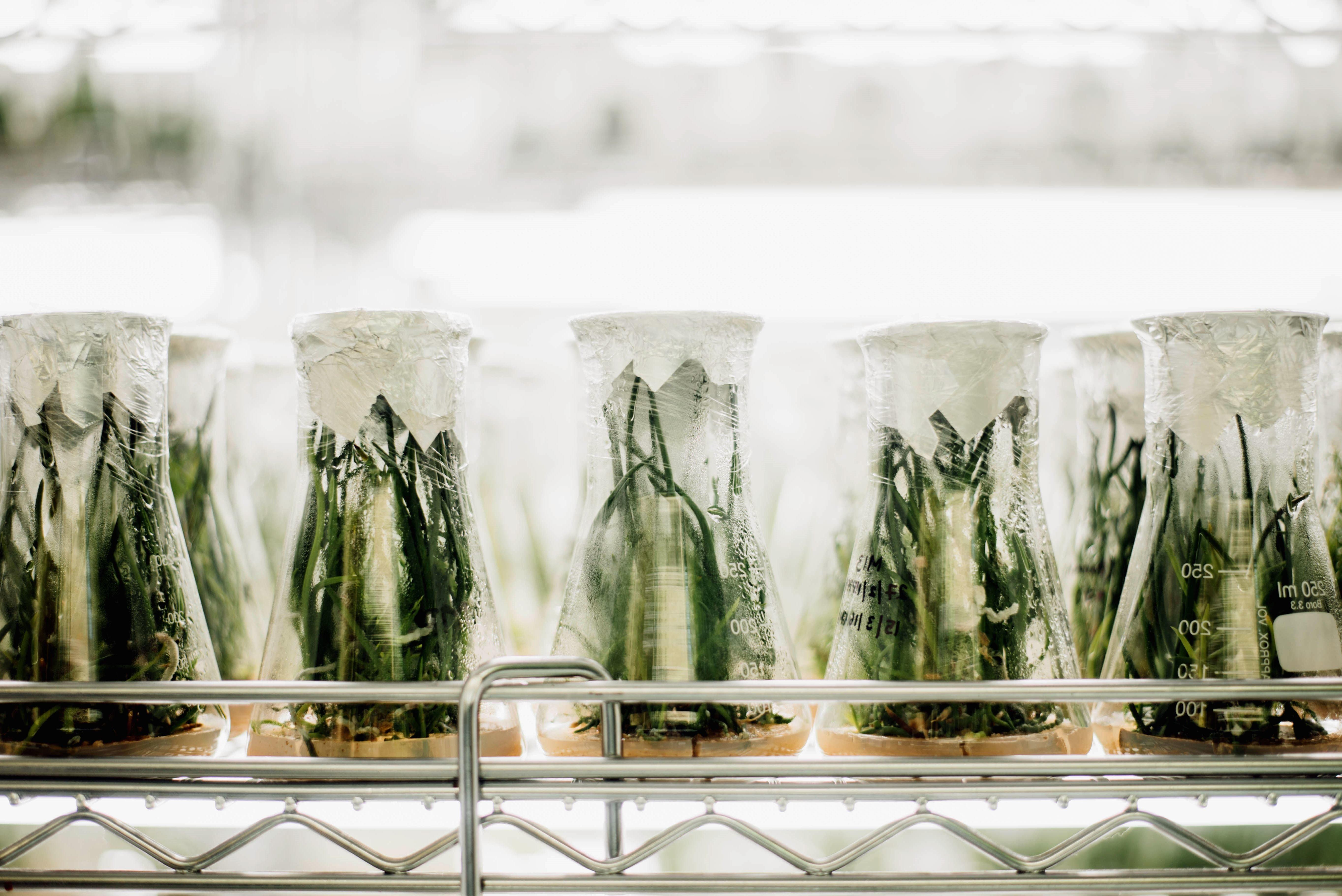 Besplatna slika laboratorij biologija biljno poljoprivrede