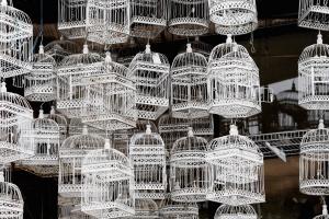 antique, bird cage, metal