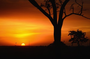 sky, sunset, tree, branches, silhouette