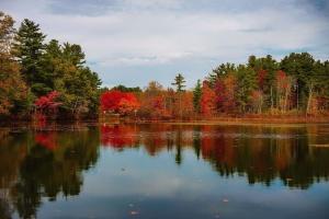 pădure, râul, cerul, turism, copac, apa, lemn, frumoase, toamna