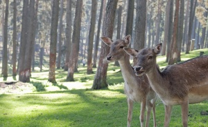 deer, trees, wild, fawn, forest