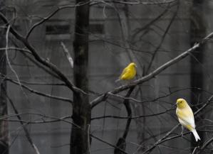 farge, tree, dyr, fugler, bygge, plomme