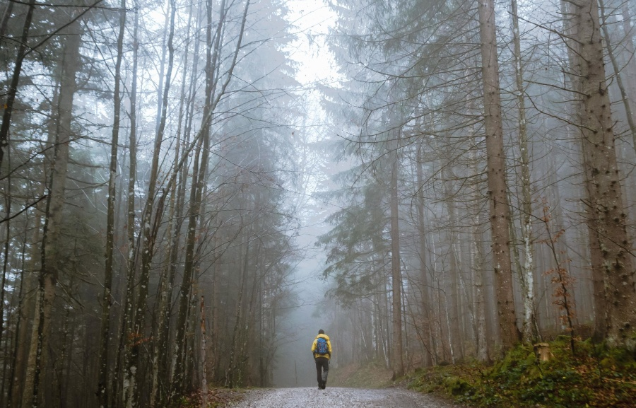 καιρός, δάσος, δρόμος, κρύο, ξύλα, πρωί, φύση, πάρκο, μονοπάτι