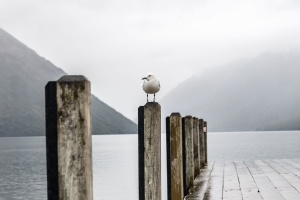seagull, bird, wood, beach, water, sea, landscape