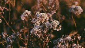sommar, vacker, bloom, gräs, park, växt