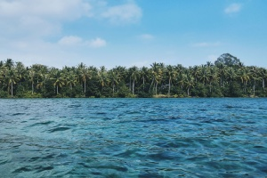 palm trees, sea, beach, forest, island, nature, tree, water