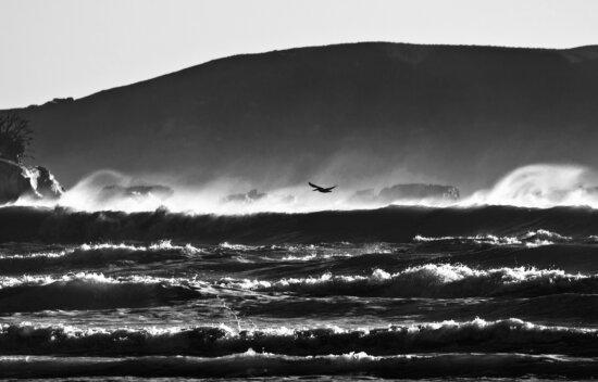 water, waves, weather, beach, bird