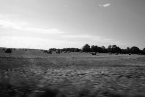 sky, trees, cropland, farm, field, hay, landscape