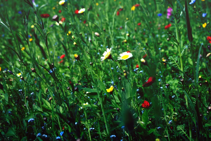 garden, grass, blossom, color, colorful, field, flowers