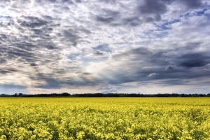 crops, rural, sky, soil, summer, sun, weather, clouds