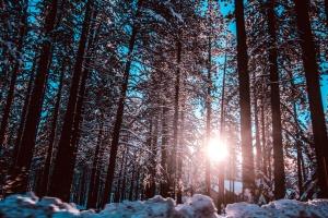 Sun, fák, erdő, hideg, tél, hó, természet