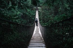 promenad, bridge, vandringsled, konstruktion, skogen, skog, grön